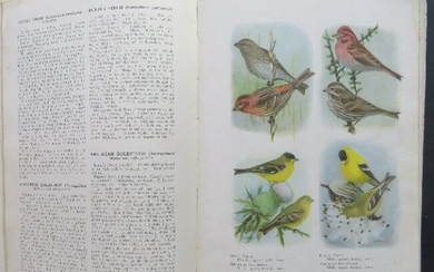 Book of Birds, town, country, American Game birds 1921