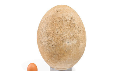 Giant Elephant Bird Egg with Remnants Inside