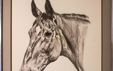 Equestrian Portrait of a Horse, Signed, Charcoal