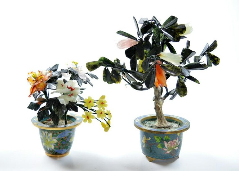 Group of Chinese Jade Trees