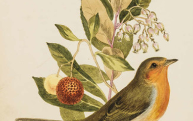 Birds.- Cotton (John) The Song Birds of Great Britain, 33 hand-coloured engraved plates, 1836.
