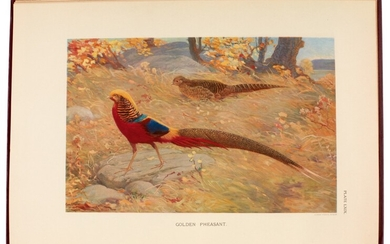 BEEBE, C.W. | A Monograph of the Pheasants, London 1918-1922, 4 volumes