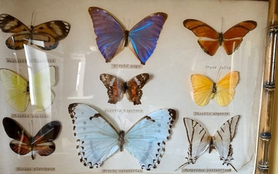 Set of twelve frames of various butterflies, some...