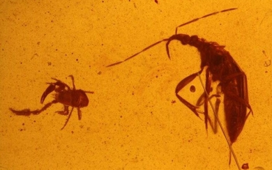 Rarity predator bug and pseudoscorpion from the DINO period - EmesinaeCheliferidae