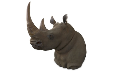 TAXIDERMY INTEREST: AN IMPRESSIVE LIFESIZE MODEL OF A SOUTHERN RHINOCEROUS SHOULDER MOUNT
