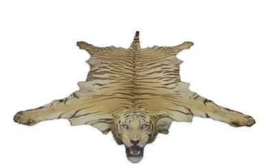 TAXIDERMY: INDIAN TIGER (PANTHERA TIGRIS TIGRIS) BY VAN INGEN & VAN INGEN, MYSORE, INDIA, 1936