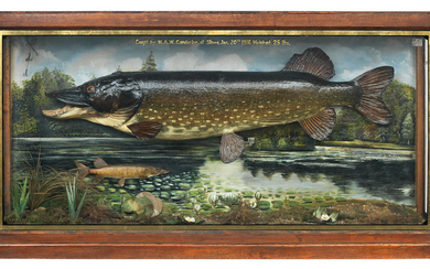 An impressive double cased Pike in a large decorated glazed cabinet