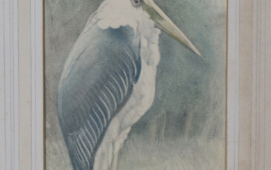 Lilian Andrews - 'The Adjutant Stork', pencil and pastel on vellum paper laid on board, si