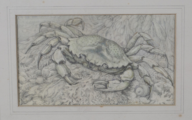 Lilian Andrews - 'Shore Crab', pencil and pastel on vellum paper laid on board, signed wit