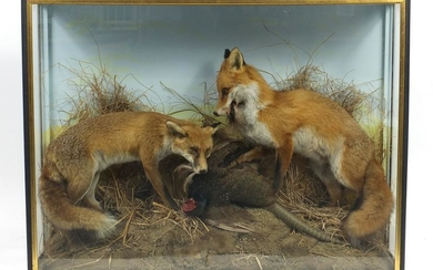 Victorian taxidermy glazed display of two foxes with a
