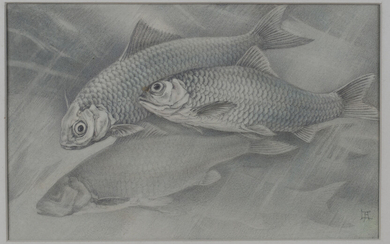 Lilian Andrews - 'Roach', pencil and pastel on vellum paper laid on board, signed with mon