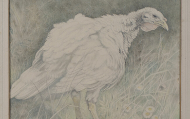 Lilian Andrews - 'The Turkey Hen', watercolour and pastel on vellum paper laid on board, s