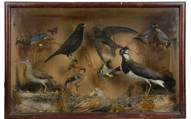 TAXIDERMY: A LATE 19TH / EARLY 20TH CENTURY DISPLAY OF VARIOUS ENGLISH BIRDS