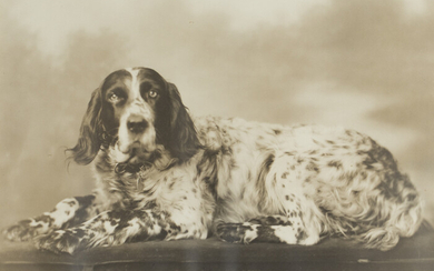 Two Early English Setter Photographs