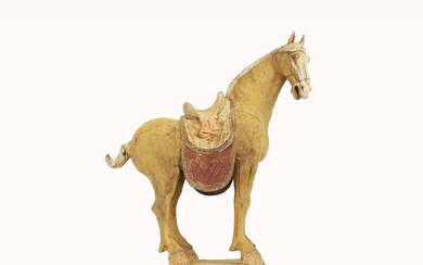 Mingqi - Terracotta - Very Large and Monumental Pottery Figure of a Ferghana Horse, TL test, H- 63 cm. - China - Tang Dynasty (618-907)