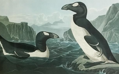 John James Audubon Print Great Auk