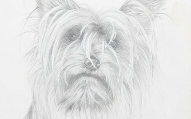 Rex Flood, Yorkshire Terrier, Pencil on paper