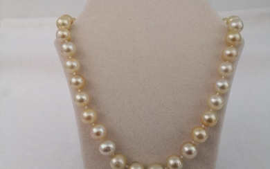10-14 mm Round Shape, Golden South Sea Pearls