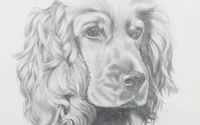 Rex Flood, Irish Setter, Pencil on paper