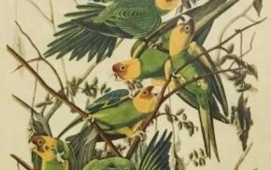 John James Audubon Print Carolina Parrot