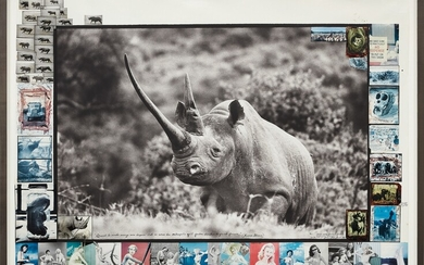 "Peter Beard, Ruhuti Valley (Aberdare Forest, Kenya), record-class rhino [circa 47""] for The End of the Game"