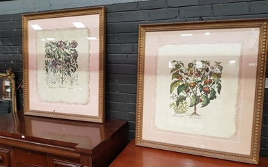 Set of (3) Florentine Style Hand-Coloured Botanical Engravings, mounted floating in gilt frames 99 x 90.5cm.