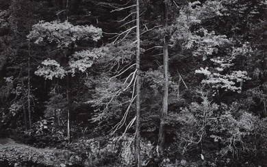 Ansel Adams, Forest and Stream, Northern California